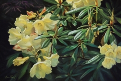 Rhododendron Sunspray