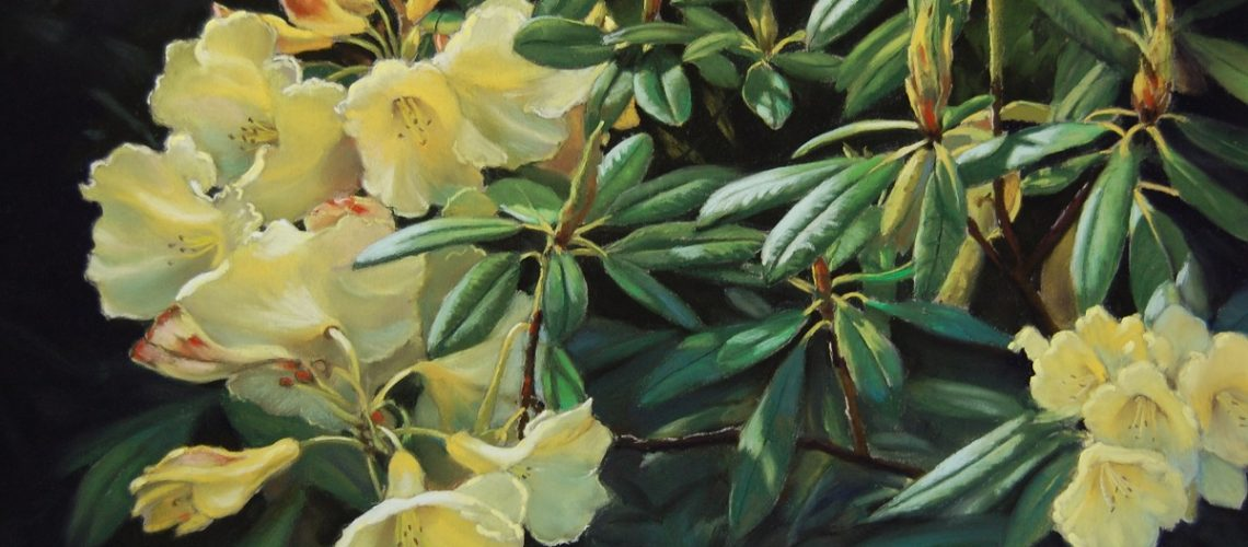 Rhododendron Sunspray - pastel