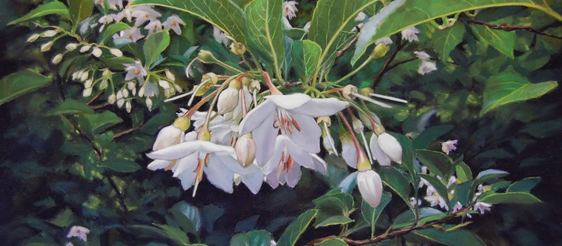 Styrax Japonica- Pastel